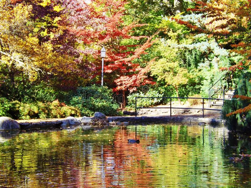 LOVELY LITHIA PARK IN OREGON IN THE FALL royalty free stock image