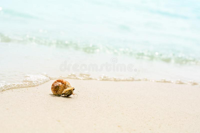 Lovely little hermit crab on the beautiful beach royalty free stock photos