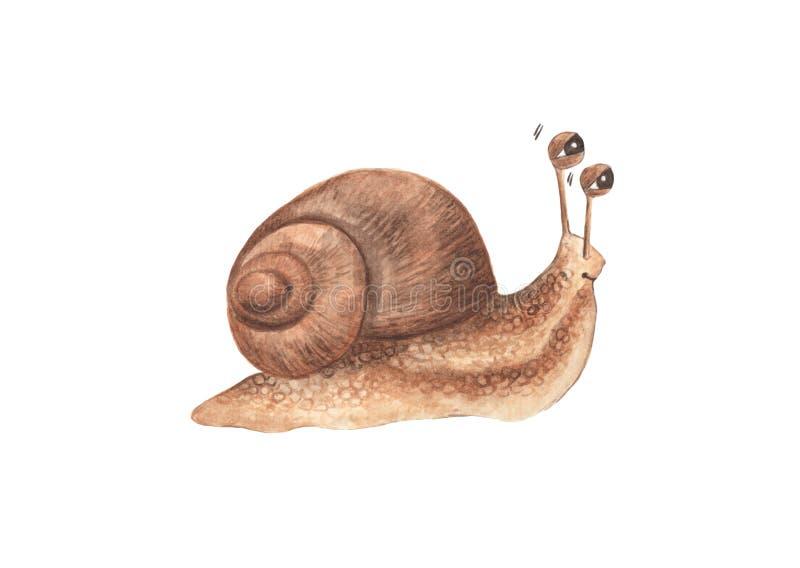 Lovely little snail isolated on white background stock illustration