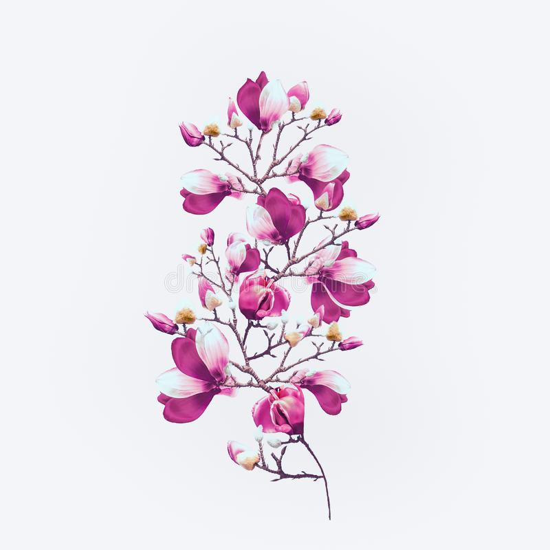 Spring nature background with beautiful magnolia blooming branches at light blue sky background with sunlight bokeh frame. Pink royalty free stock images