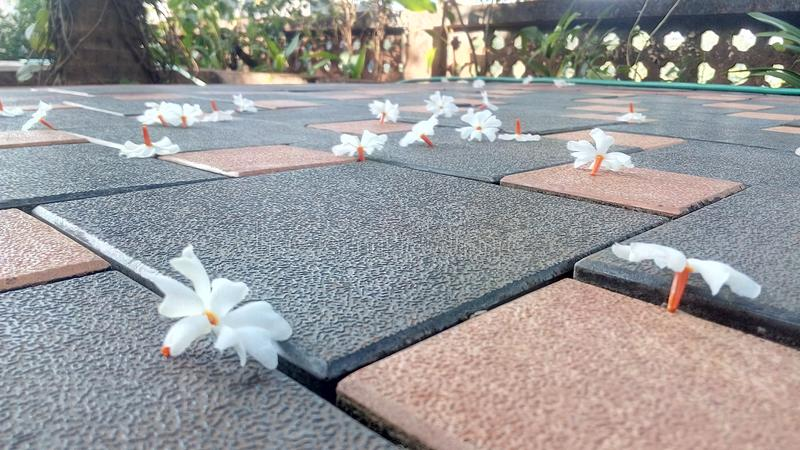 Flowers on floor. Lovely morning click stock photography