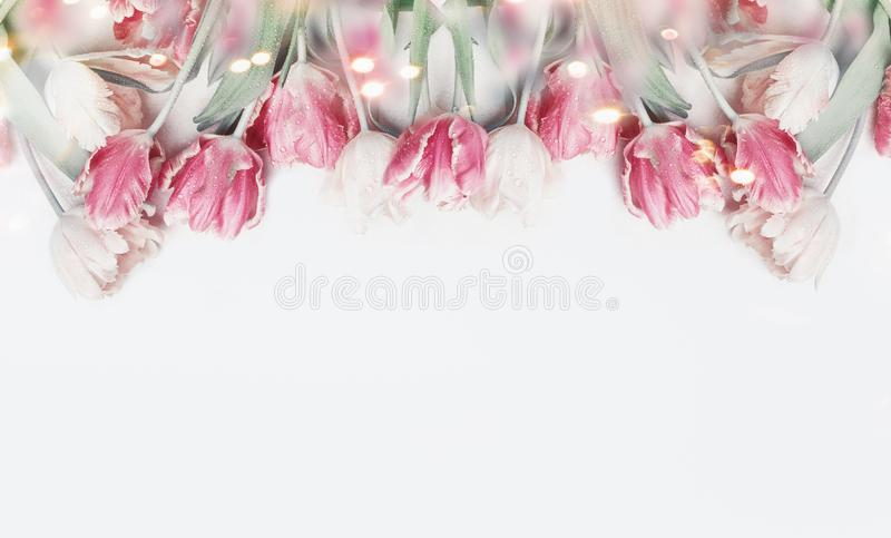 Lovely pastel color tulips border on white background with bokeh. Springtime flowers, top view. Spring nature and holidays concept royalty free stock images