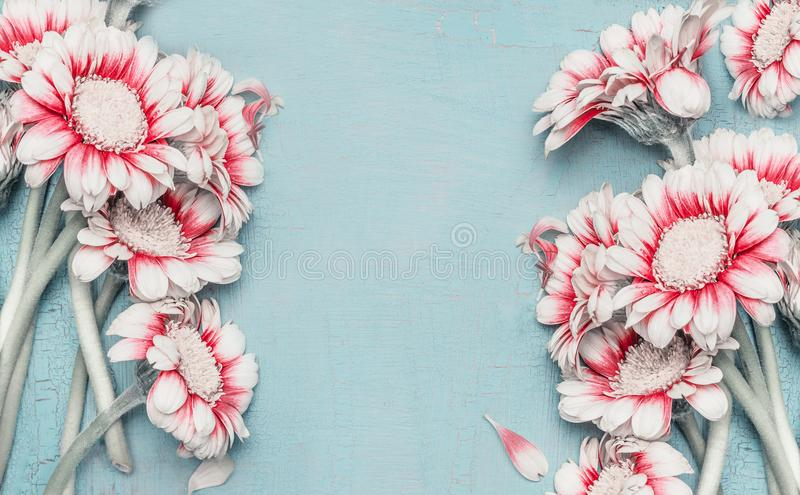 Lovely pastel flowers frame with daisies on turquoise blue shabby chic background, top view, border. Layout for greeting royalty free stock photography