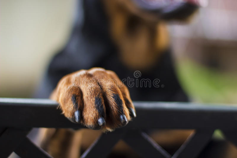 Lovely paw stock photo