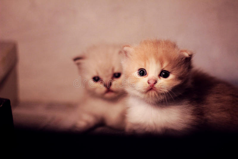 Lovely pets royalty free stock photo