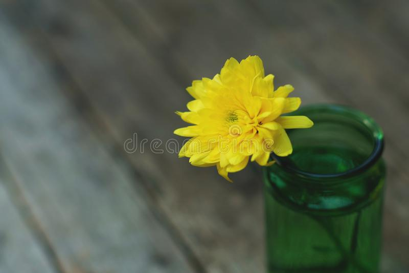 Lovely yellow blossom chrysanthemum in vase on wooden table with white wall background, still life concept stock photos