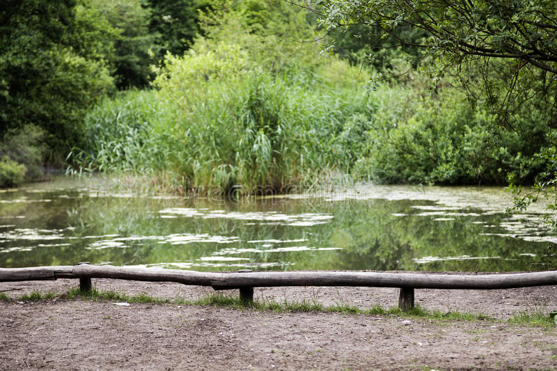 Download Park Pond stock photo. Image of bodies, berlin, tree - 29959986