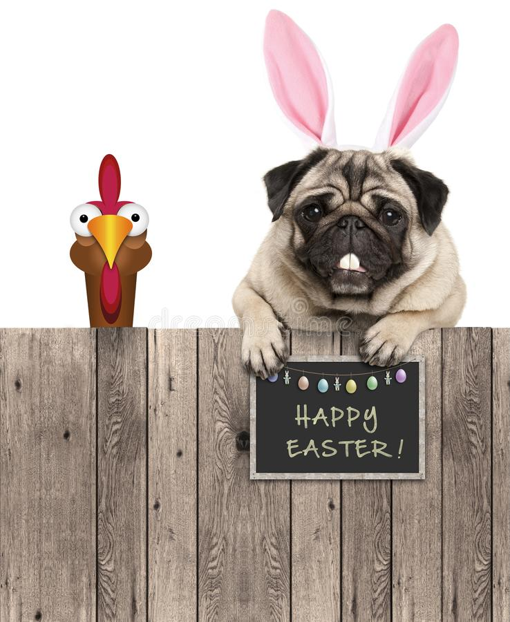 Lovely pug dog with easter bunny ears diadem and chicken, with sign saying happy easter. Isolated on white background stock photography