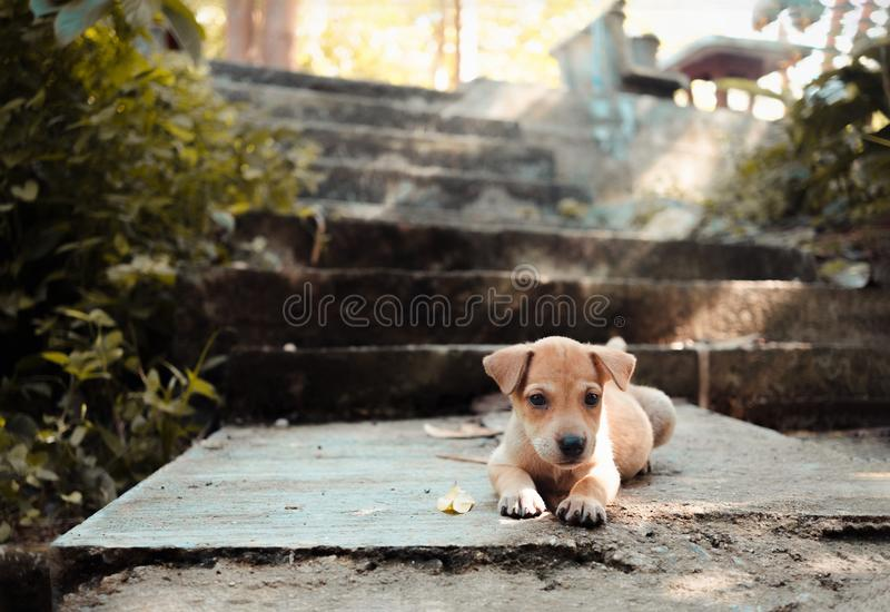 Lovely puppy in front of stair in the park stock photo