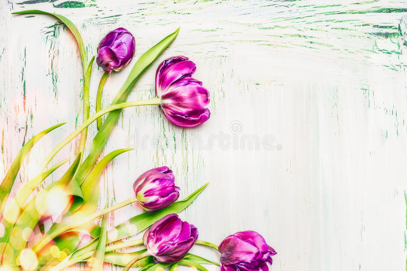 Lovely purple tulips bunch on white wooden background, spring flowers concept stock photography