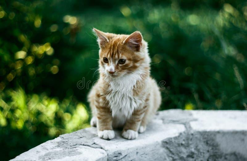 Lovely red kitten sitting in the garden. Lovely red kitten sitting in the green garden stock photo