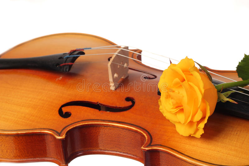 Lovely rose on musical instrument. Classical baroque light brown violin with yellow fresh rose royalty free stock photos