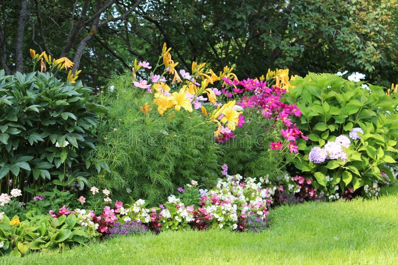 A lovely selection of colourful flowers. Blooming in the sun stock photo
