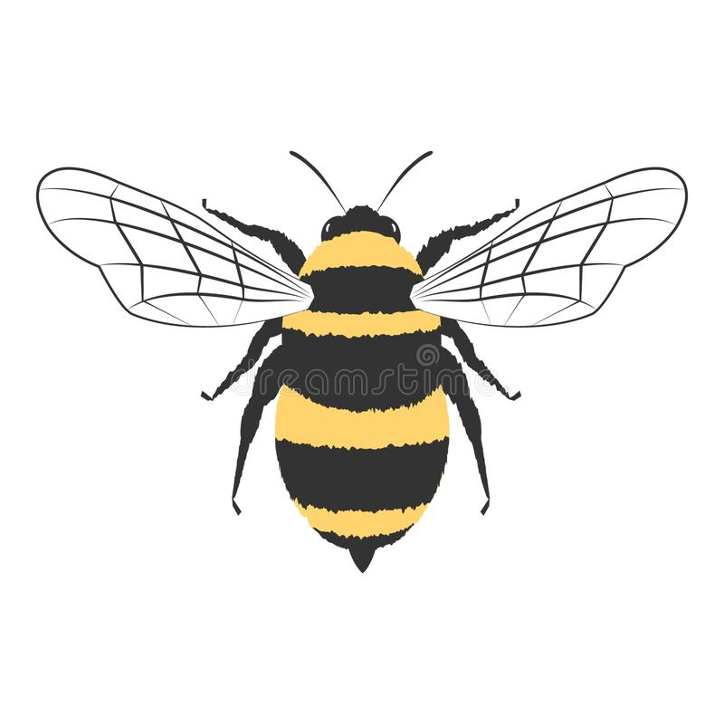 Free Lovely Simple Design Of A Yellow And Black Bee On A White Background Stock Photography - 164951062