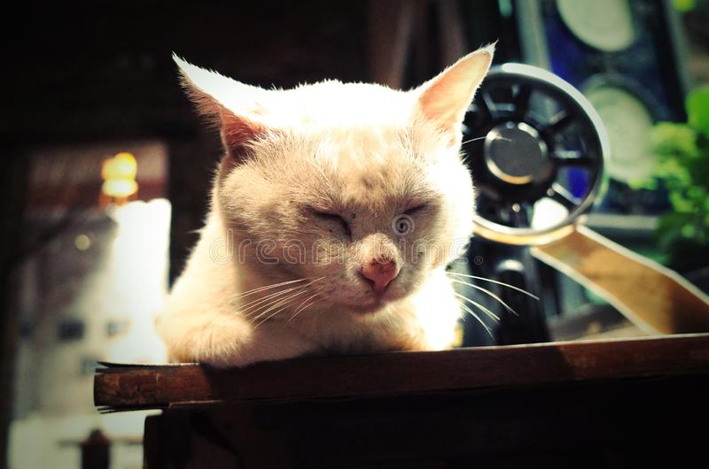 A lovely sleeping cat. In a Chinese farmer`s home. A lovely sleeping cat in a farmer`s house,a royalty free stock image