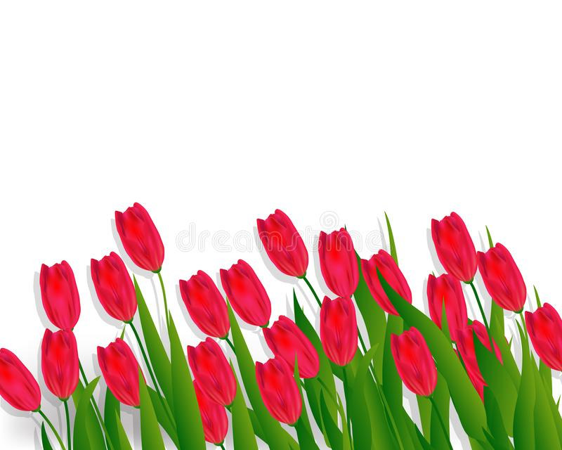 Lovely spring background with tulip flowers vector image stock illustration