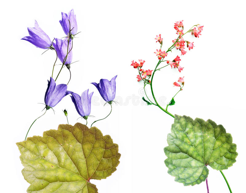 Lovely spring flora. Beautiful and colourful spring flora against white background stock photography