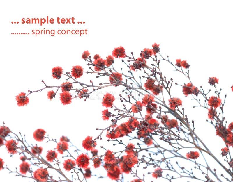 Lovely spring flora royalty free stock photos
