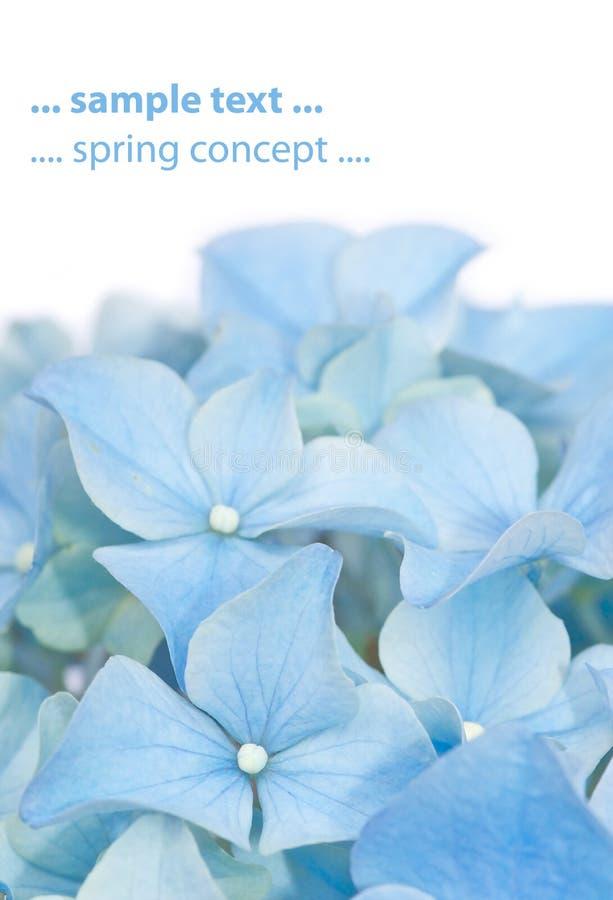 Lovely spring flora stock photos