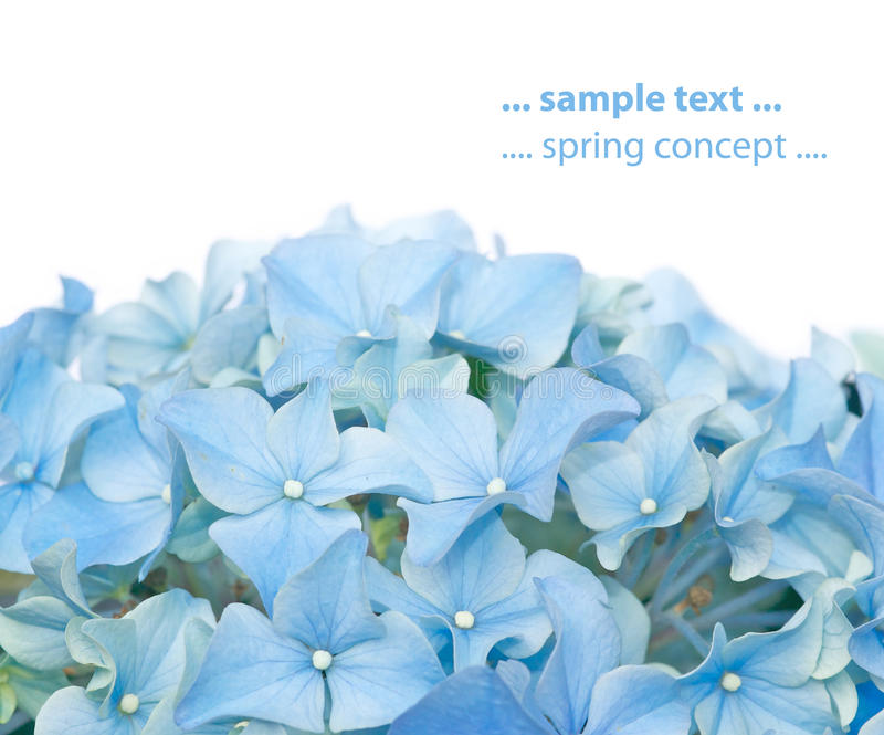 Lovely spring flora stock images