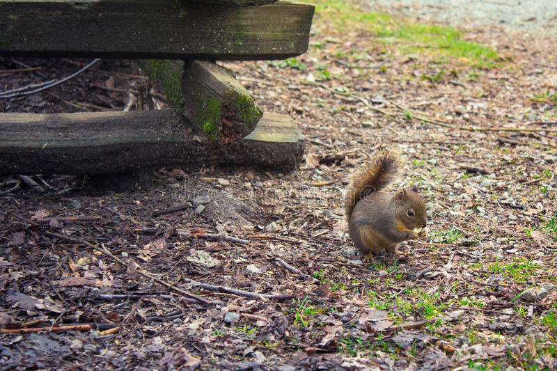 Download Lovely Squirrel In Autumn Park Stock Image - Image of little, correct: 83701891