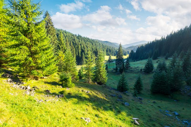 Lovely valley with spruce forest. Wonderful landscape of Apuseni mountains in autumn. beautiful cloudscape above the ridge. travel Romania discover europe royalty free stock photo