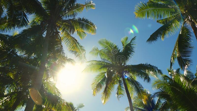 Lovely view of the sun royalty free stock images