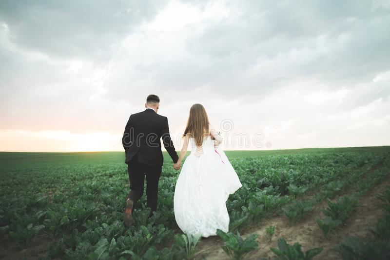Lovely wedding couple, bride and groom posing in field during sunset stock photography