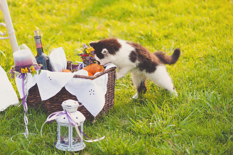 Lovely wedding decor with a cat stock image