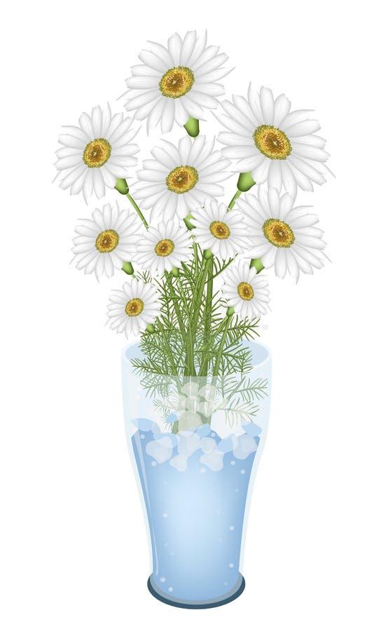 Lovely White Daisy Flowers In Glass Vase Stock Photo ...