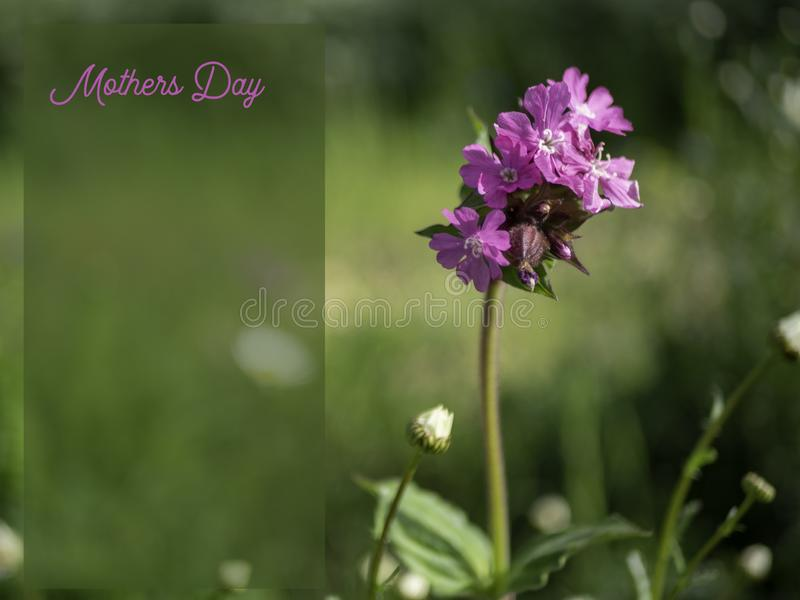 Mothers Day image with a pink flower. stock images