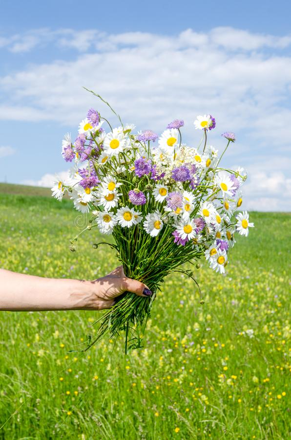 Lovely wild flowers bouquet in a woman`s hand stock photos