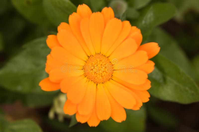 Lovely yellow autumn flower. Close up. Conceptual design for greeting card.  stock image