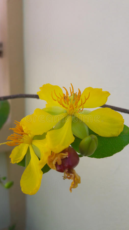 Lovely yellow flower royalty free stock photos