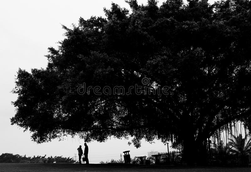 Lover under the tree stock photo