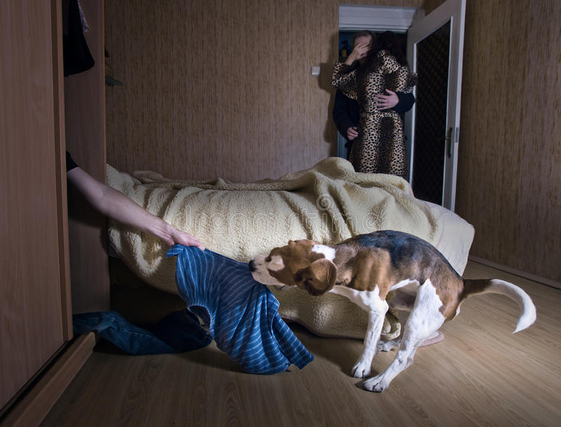 Lover in a wardrobe. The dog has found the lover in a wardrobe stock image
