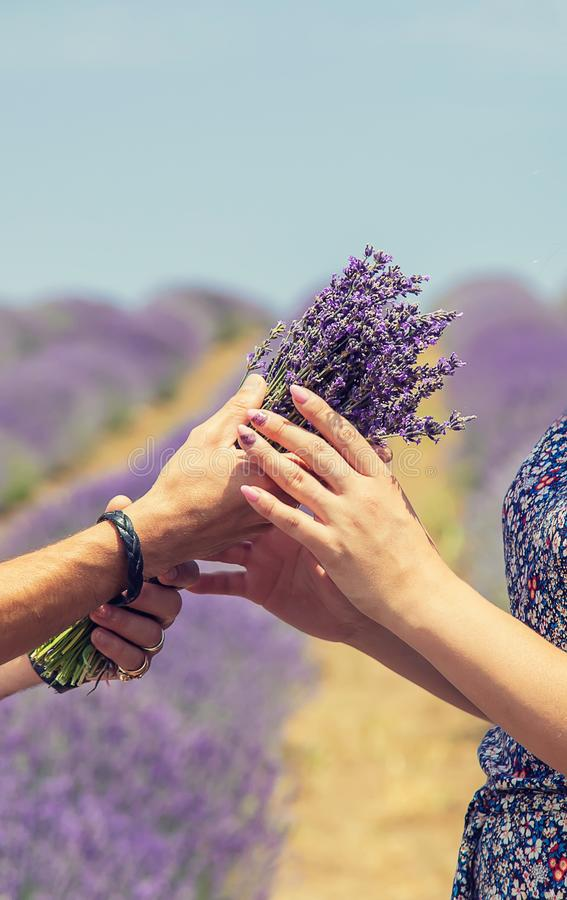 Lovers in the blooming field of lavender. Selective focus royalty free stock photos