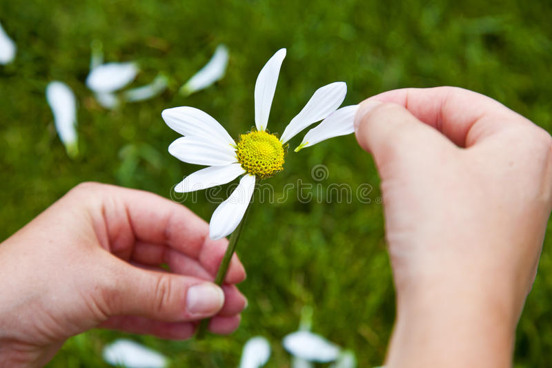 Download He Loves Me, He Loves Me Not Stock Photo - Image: 20387438