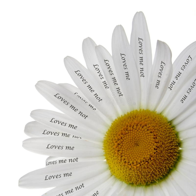 Free Loves Me Or Not Chamomile Stock Photo - 14589490
