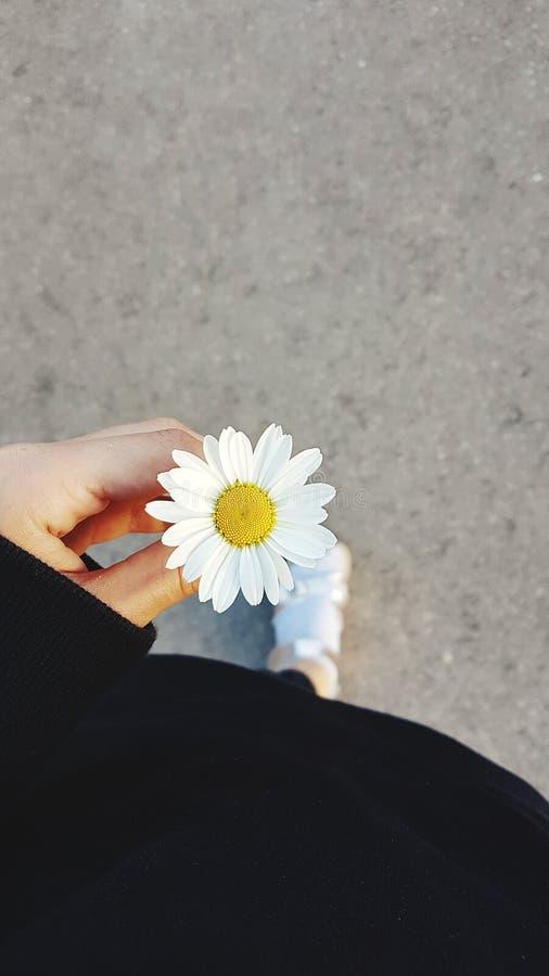 Loves? Not loves?. Loves? Not. Loves? Not. ?. ?, flower, daisy, wild, human, body, asphalt, white, vertical, lithiania, lithuania stock photography
