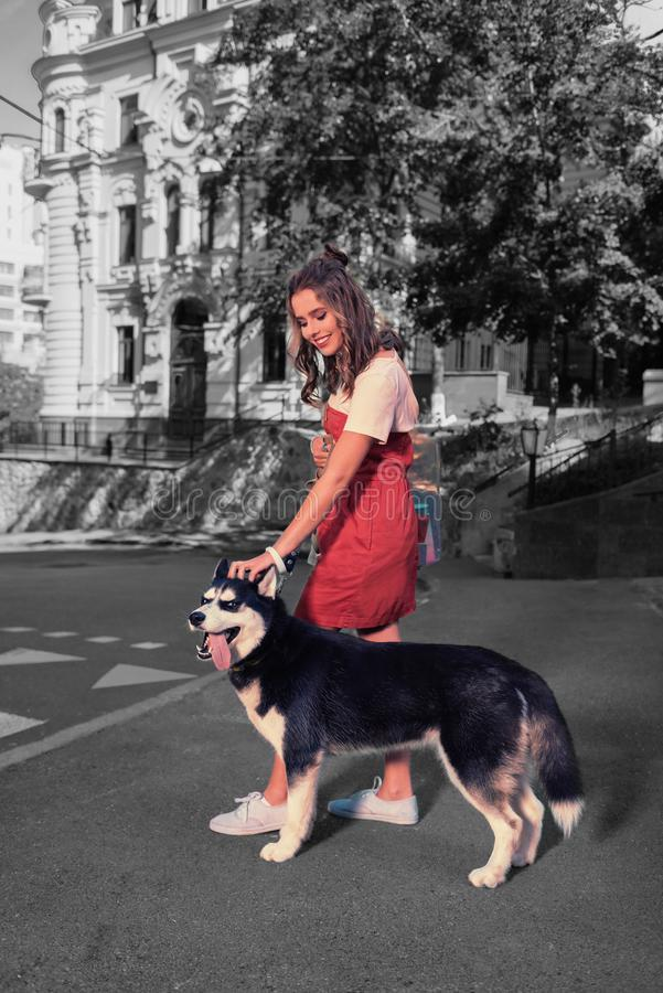 Loving caring woman feeling nice while petting her nice dark dog while walking royalty free stock photos