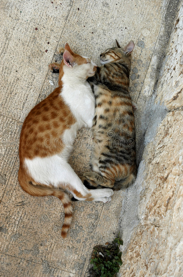Download Loving Cats Royalty Free Stock Photos - Image: 518068