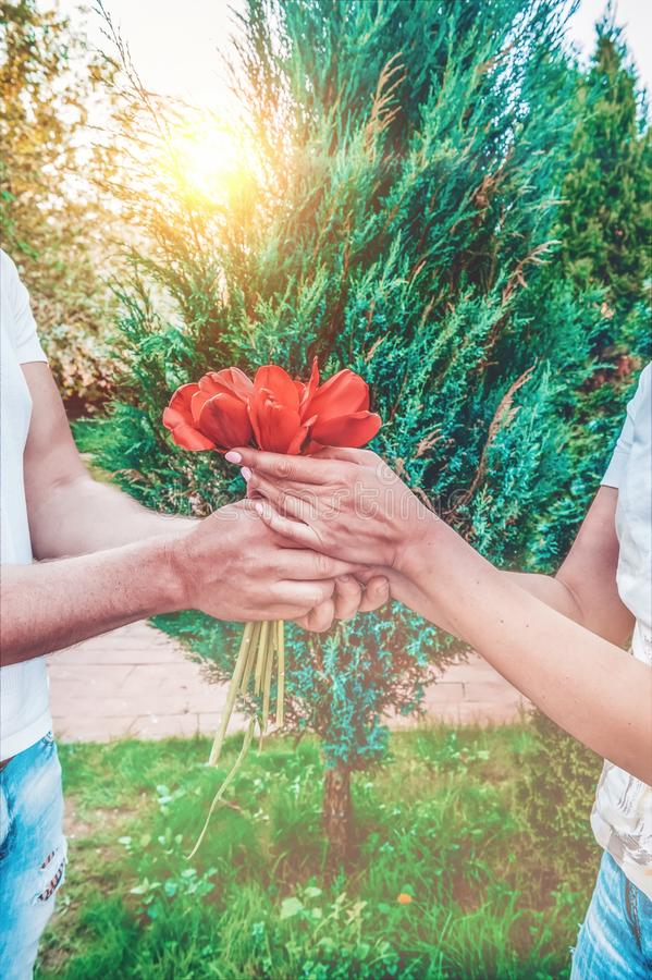 Loving couple holding a bouquet of tulips on a background of beautiful trees. A man gives his beloved flowers royalty free stock images