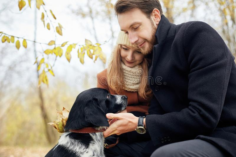 Loving couple walk through the autumn forest Park with a Spaniel stock photos