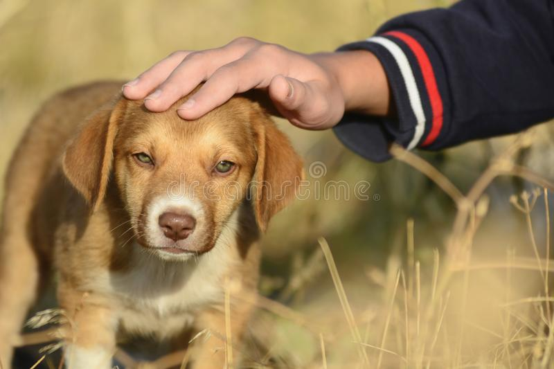 cute little puppy and love stock photo