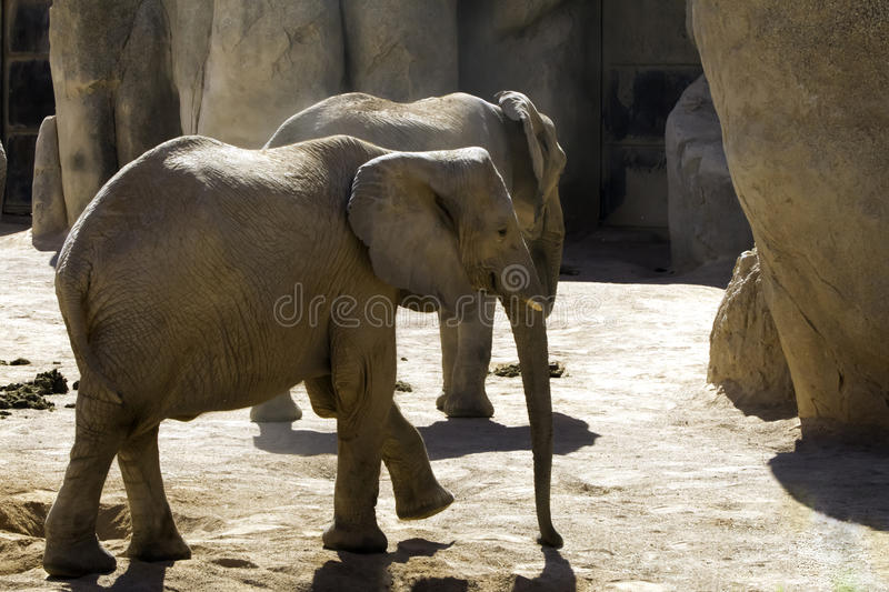 Download Loving Elephant Royalty Free Stock Photos - Image: 34658648