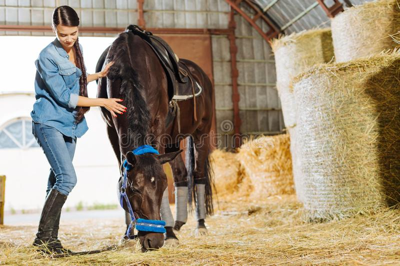 Loving female rider coming to stable for visiting her dark horse. Female rider. Loving female rider wearing jeans and riding boots coming to stable for visiting royalty free stock photography