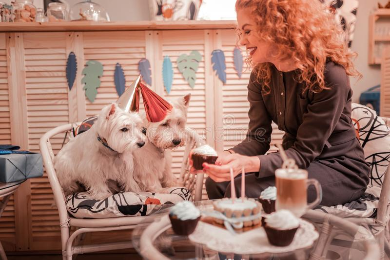 Loving owner of two white dogs giving them some cupcakes stock photo