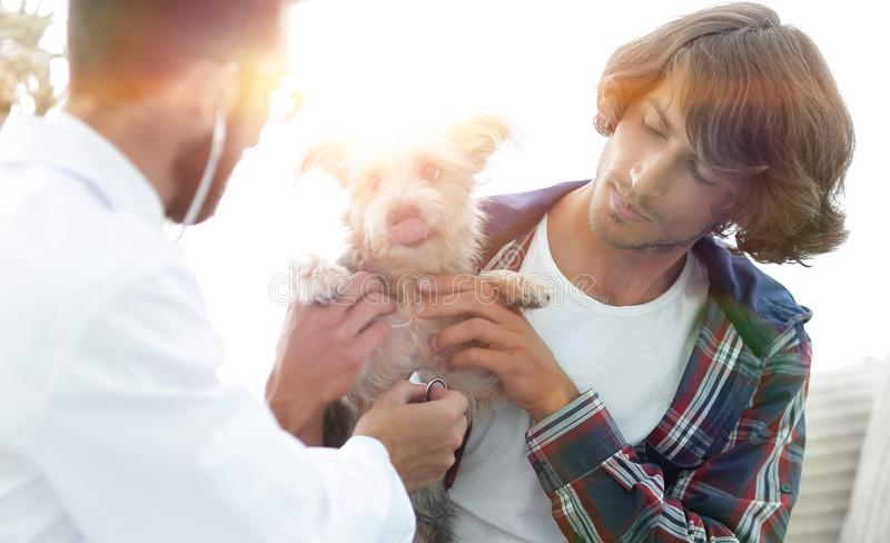Loving owner with a Yorkshire terrier in the office of a veterin royalty free stock images