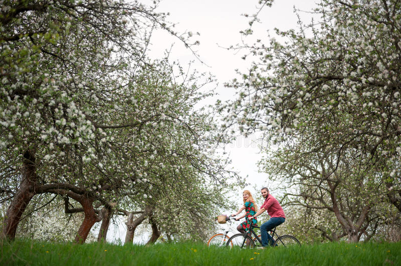 Loving young couple riding bicycles in the spring garden. Young couple ride bicycles in the spring garden with blooming trees and fresh greenery grass. Couple stock photography